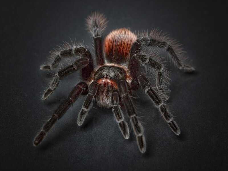 Soñar con araña