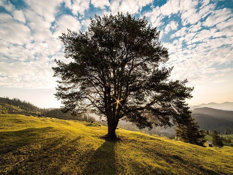 Soñar con árbol
