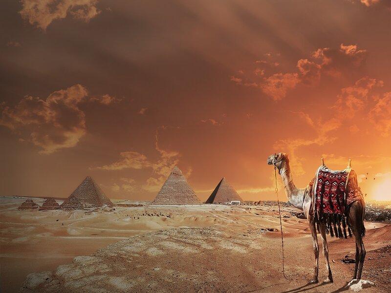 soñar con camello