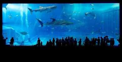 soñar con acuario