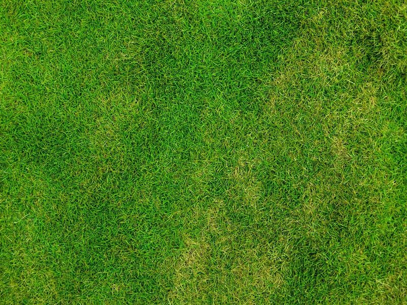 soñar con hierba
