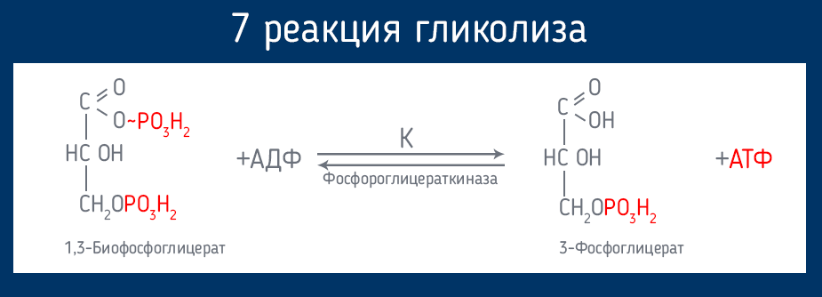 Lactovita средство от диабета - UZ (Узбекистан)