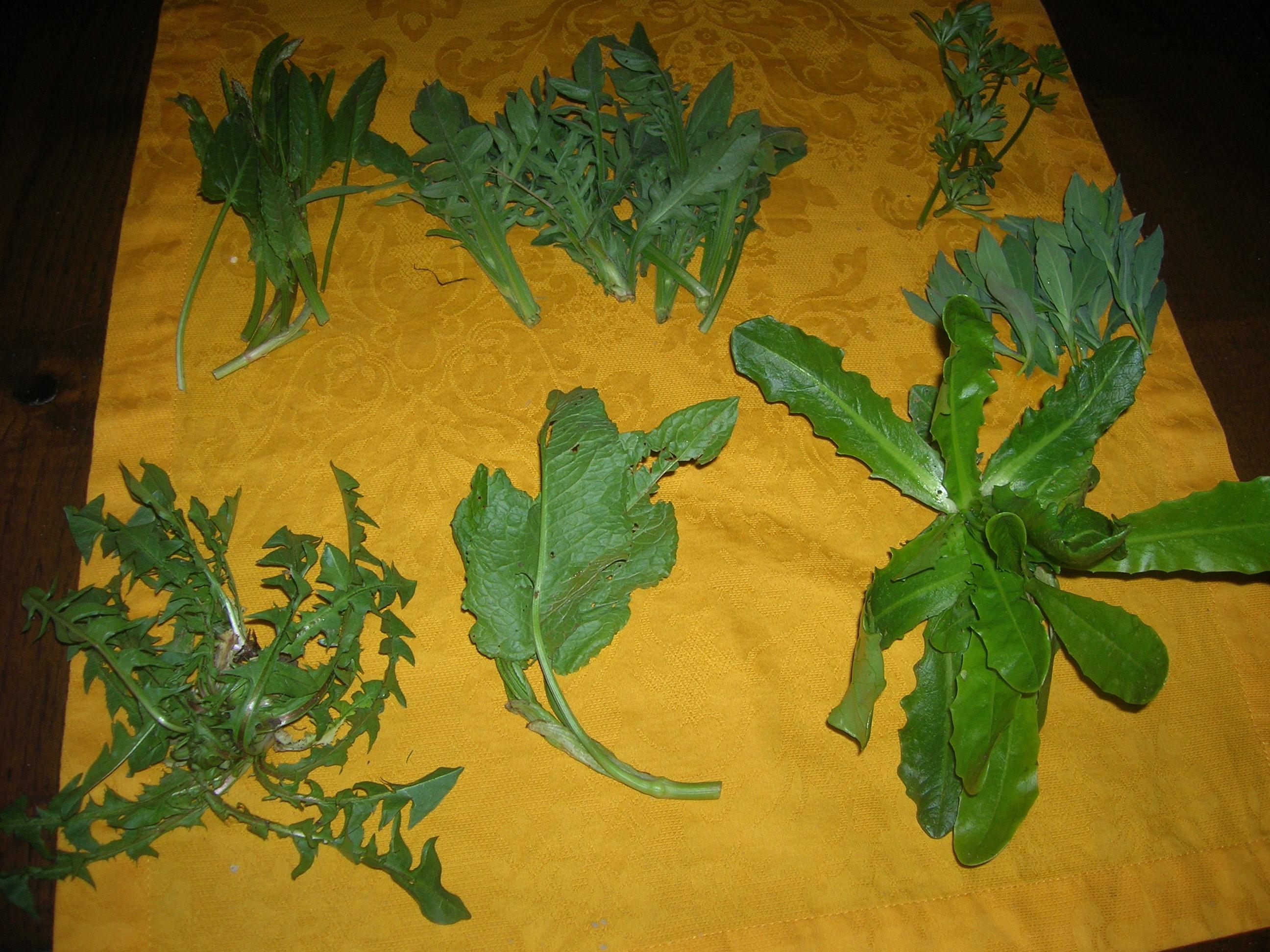 Erbe selvatiche  La Cucina della Cesarina