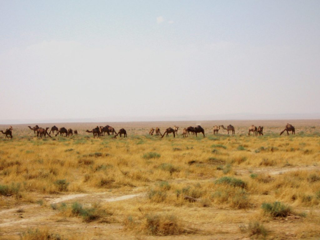 Chamo - Syrie 2010