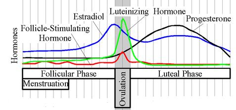Graph showing hormones during menstrual cycle