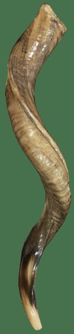 shofar11
