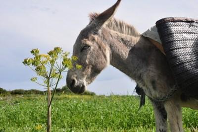 donkey-1714138_1280