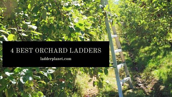 Best Orchard ladder