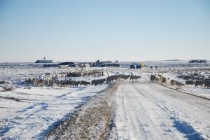 I80 behind, winter pasture ahead