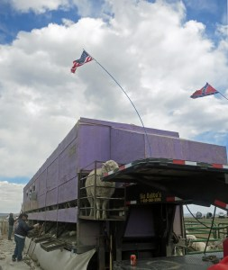 Flags flying over the purple Hoopes shed, Judas sheep in front