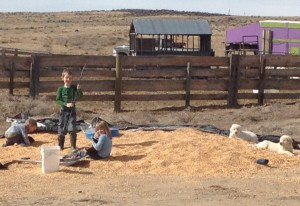 Tiarnan, Seamus, Maeve and puppies playing in the corn