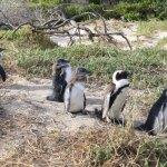 放鬆在巨石海灘企鵝搖搖擺擺地在父-子