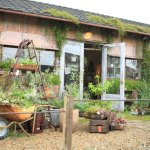 "Garage Toyohashi branch、Gift plants in Hamamatsu ""Living with plants Rust lust."