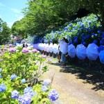「法多山尊永寺」見頃を迎えた彩り豊かな紫陽花と清涼感溢れる音色の風鈴まつり