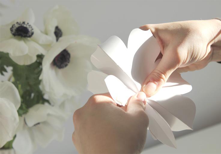 collage des fleurs entre elles