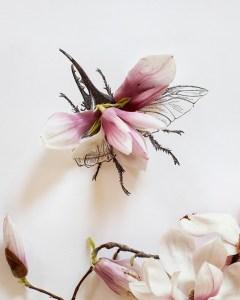insecte LDP