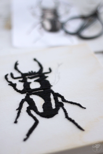 insecte DIY collection curieuse