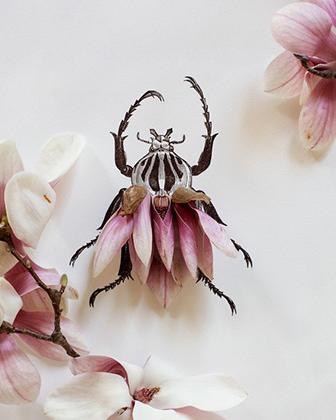 magnolia insect