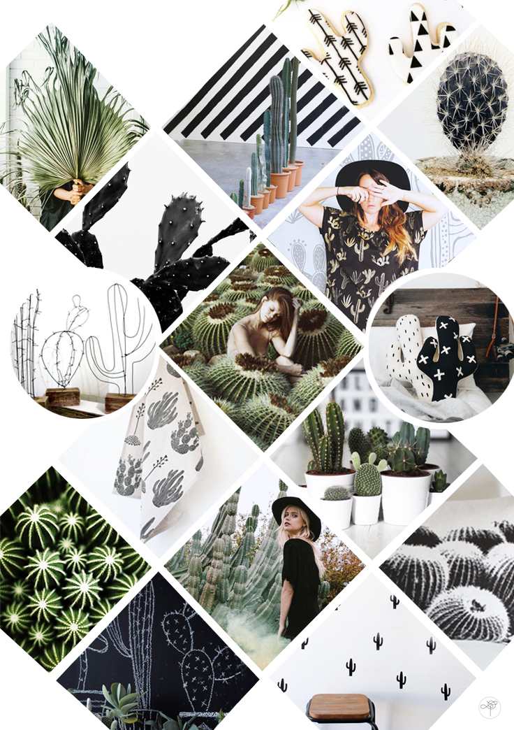 cactus mood board inspiration graphique