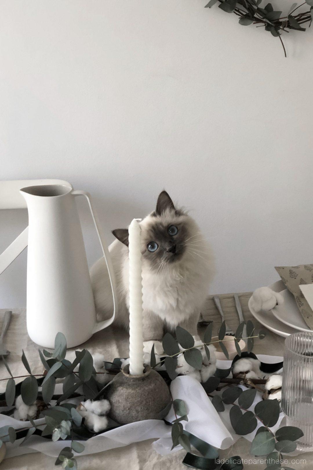 cat surprise table de noel en cours de création