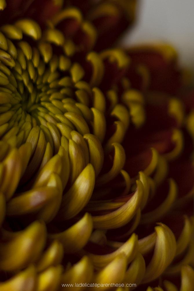 fleur orange automne