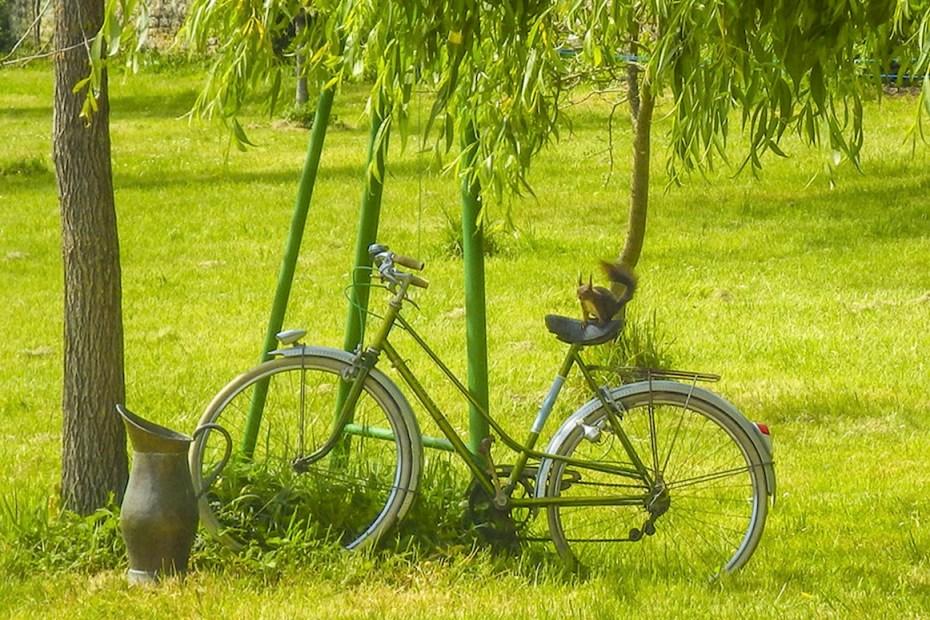 L'écureuil Anatole dans le parc