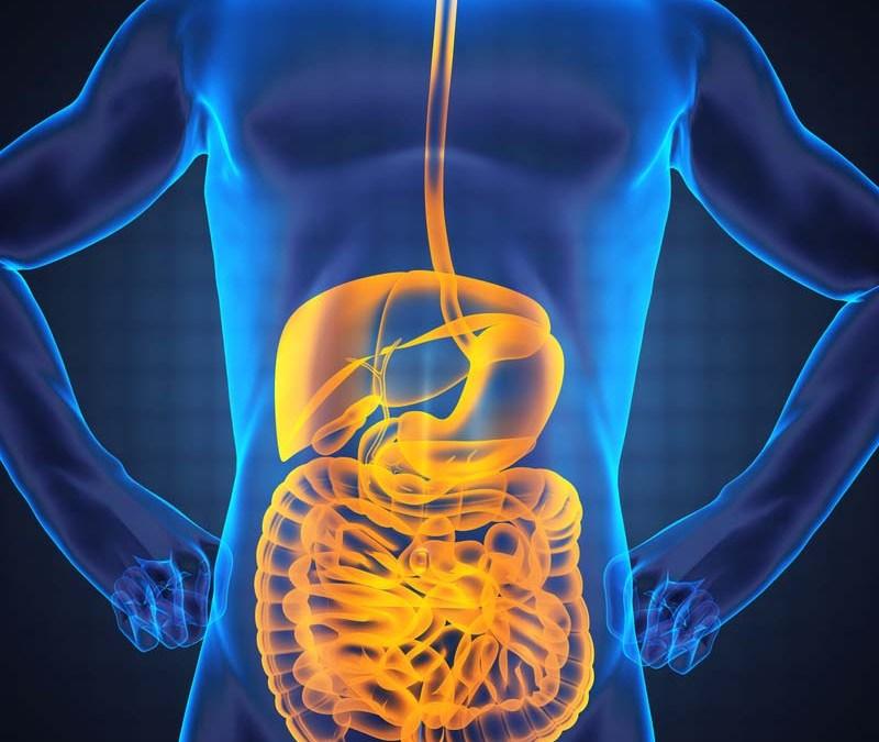 Två nya kurser – mat som medicin och friskare mage-tarm