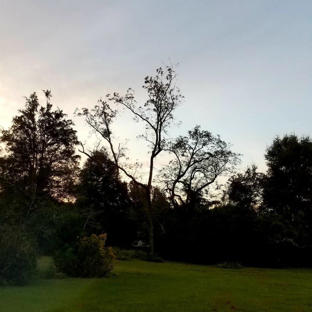 A photo of the treeline at dusk.