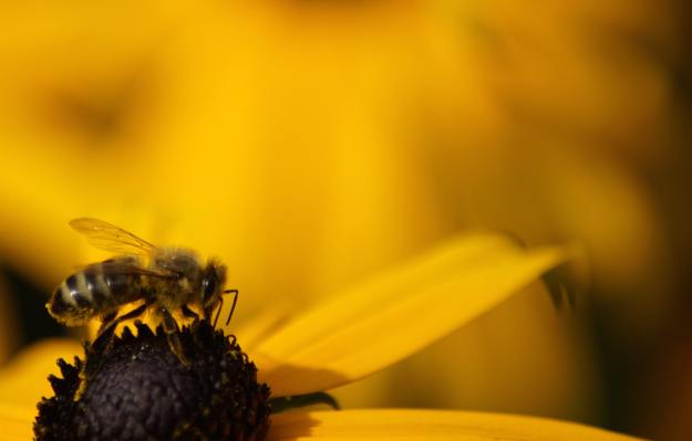 200520 - Bee brave not yellow by Carlien van Oijen by Unsplash - La Déviation