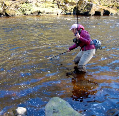Anne into a fish on the River Tees