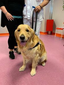 Animali in ospedale a trovare padroni: All'Hospice Universo Salute-Don Uva primo progetto in Puglia
