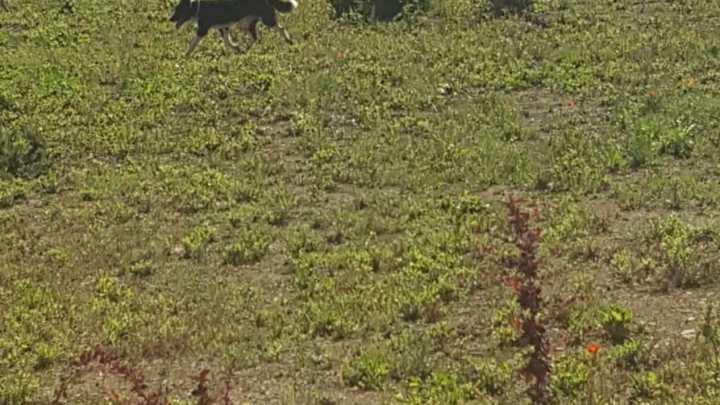 """Cani randagi avvistati nei giardini della scuola """"Don Pino Puglisi"""""""