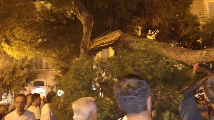 Cade un albero, paura al Palazzuolo. Nessun ferito