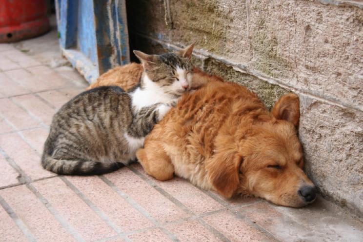 Bisceglie resta tra i comuni che permettono detrazioni fiscali per chi adotta un animale domestico