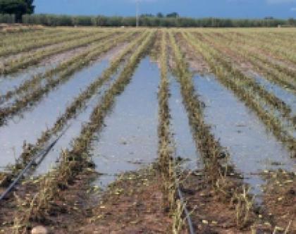 Maltempo, la Regione Puglia chiede lo stato di calamità per la nostra agricoltura
