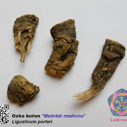 "Osha kořen (Ligusticum porteri) - ""medvědí medicína"", 10 g"
