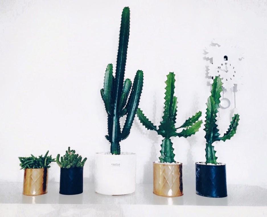 kaktuswarsaw2