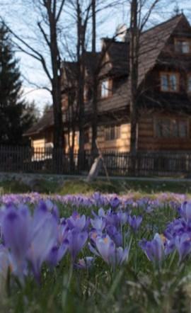Hotel-Restauracja-I-Lesniczowka-U-Zieby-Witow-653429
