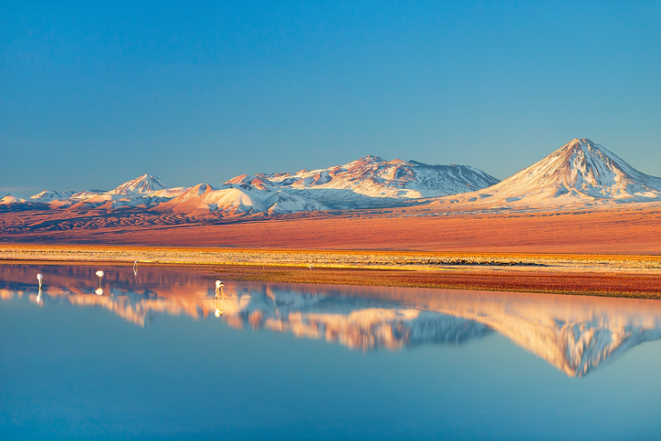 Wild Flamingos stand in a salt lagoon of Atacama desert, Chile