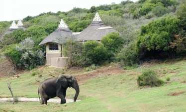 amakhala_lodge_africa_elefante