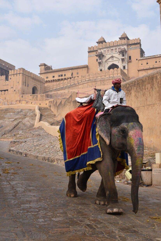 elefantes usados na india