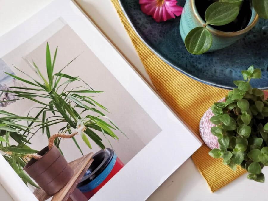 Boekentips voor in quarantaine: boeken over planten