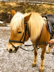 Francisca, golden horse with a golden heart