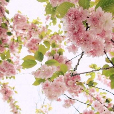 Frühling in Berlin – Einfach schöne Aktionen für gute Laune