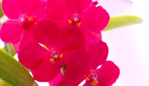 【続】5/19「巳の巻」レポと、実力UPトレーニングの勧め