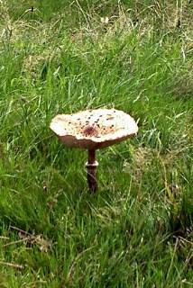 ein riesiger Pilz auf einer Wiese