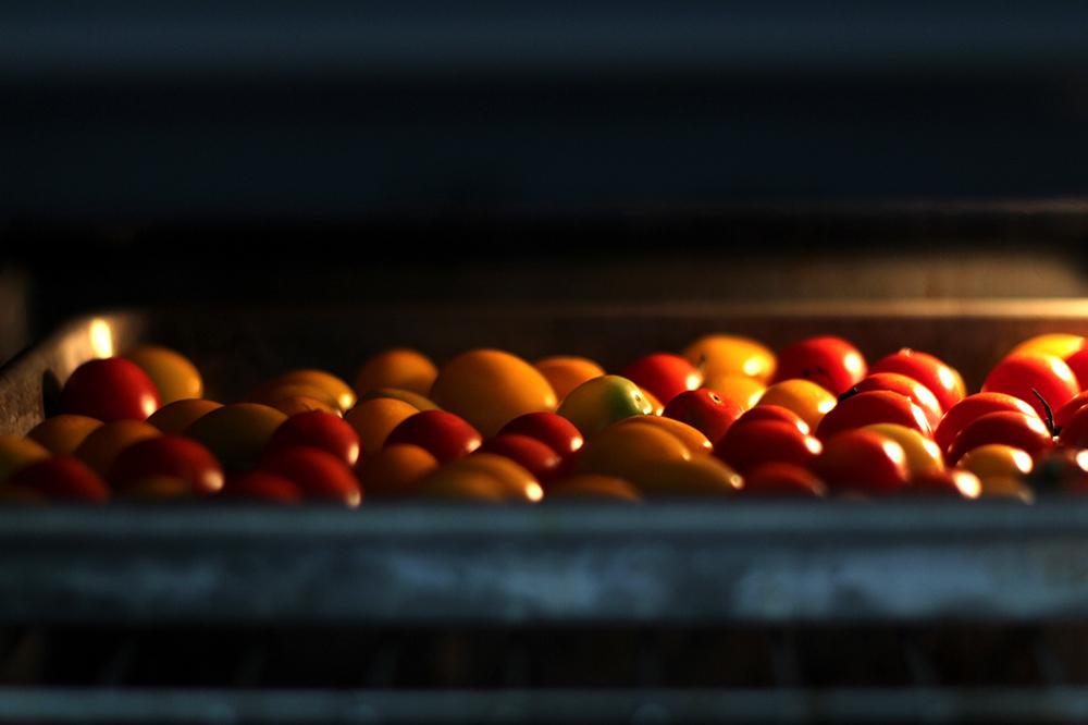 cherry-tomato-vinaigrette-bruschetta3