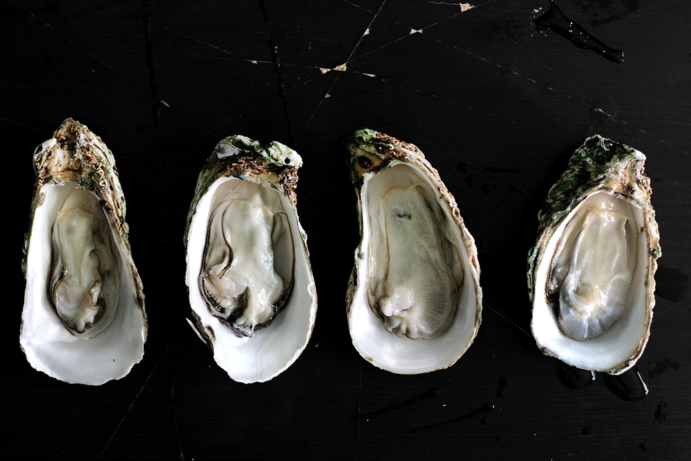 shuck-oyster11
