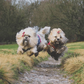 Elsa and Bufy, from Paws across Britain