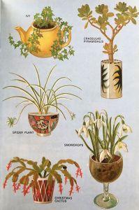 Indoor Gardenting